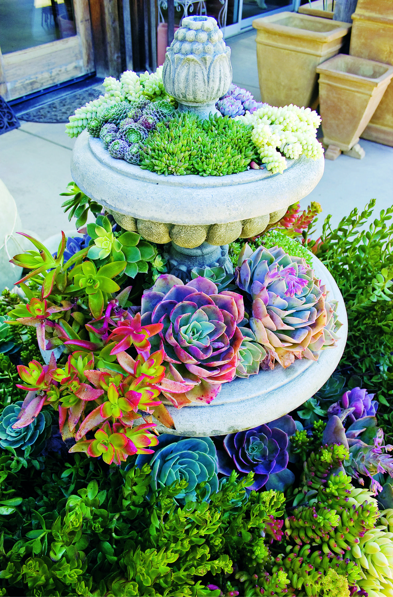 50 ways of creating an enchanted succulent garden in your for Piante decorative