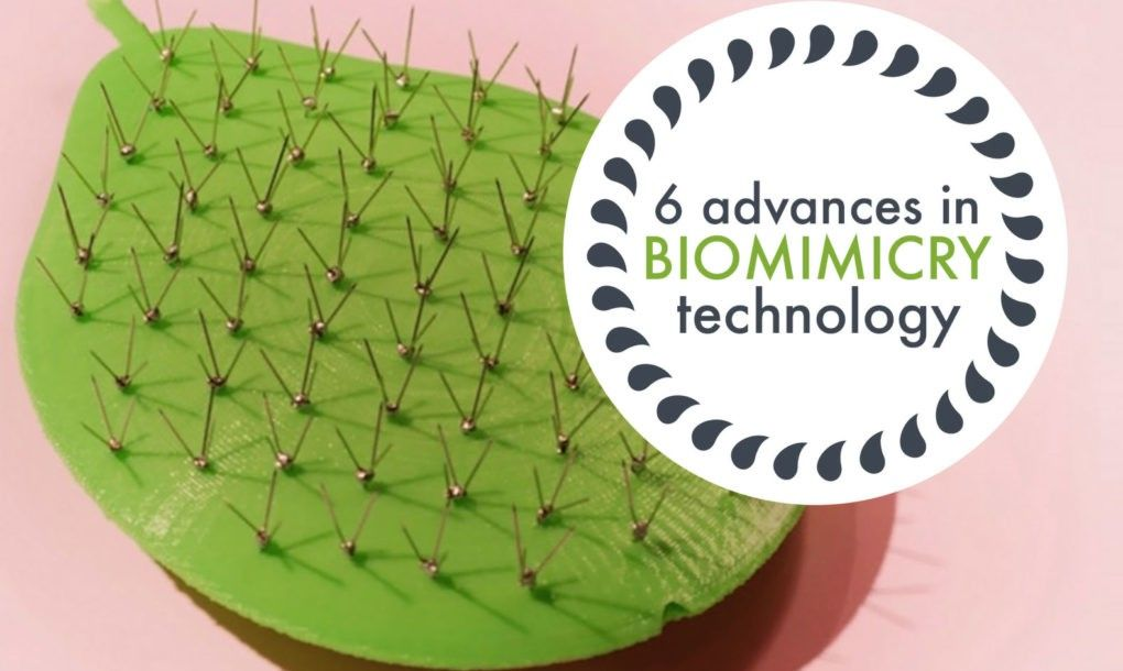 6 Groundbreaking Examples Of Tech Innovations Inspired By Biomimicry Innovation Tech Innovation Inspiration