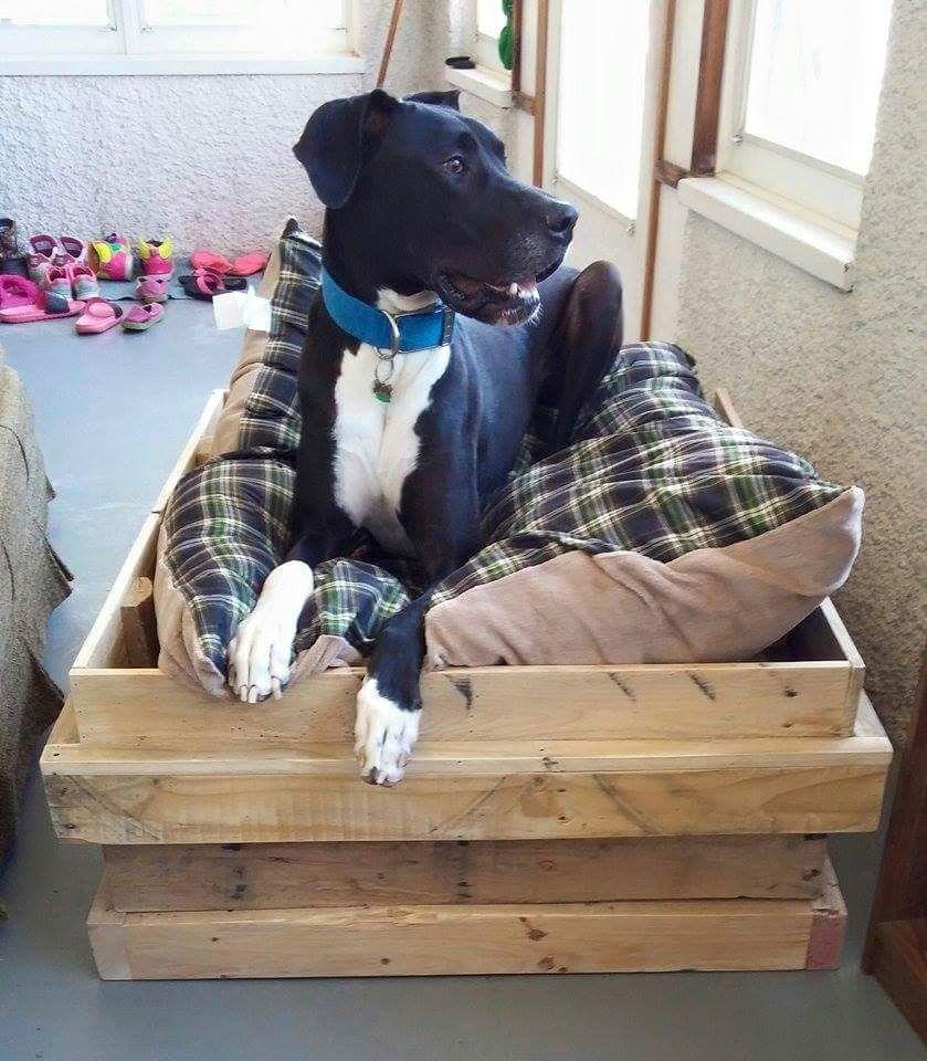 Dog bed (large dog) Dog bed large, Large dogs, Dog bed