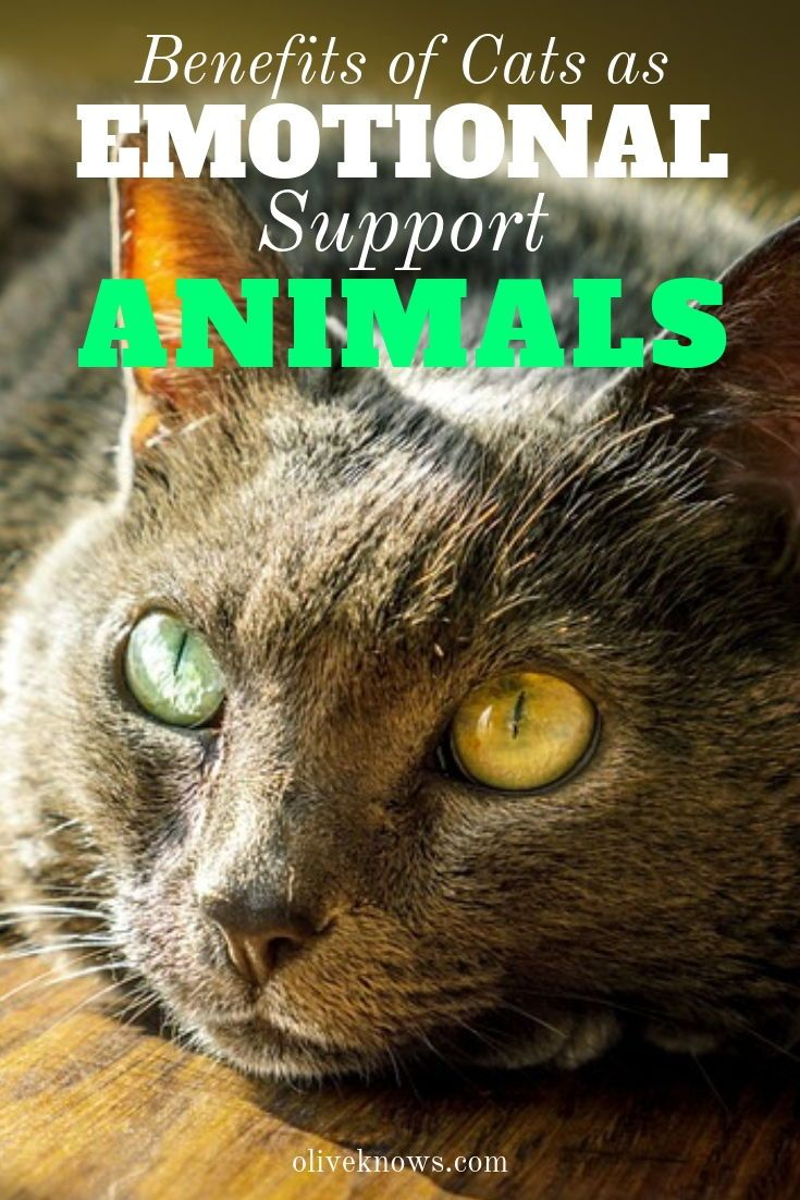 17++ Can cats be emotional support animals ideas in 2021