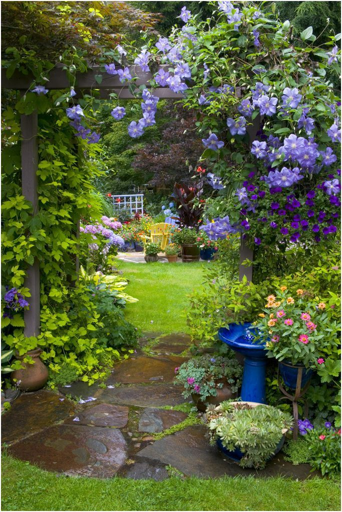 Photo of Our garden with clematis climbing over arbor. – Modern Design