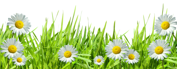 Grass With Flowers Png By Hanabell1 On Deviantart Flower Border Flower Border Png Flowers