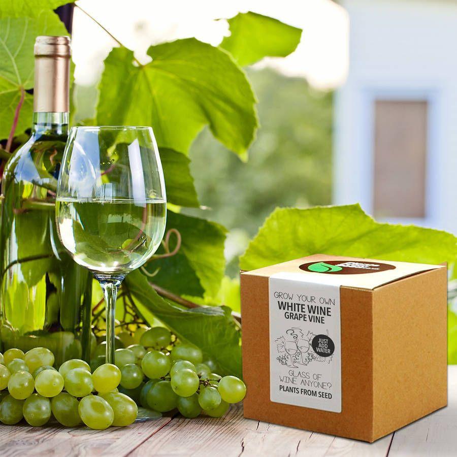 Grow Your Own White Wine Grape Vine   White wine ...