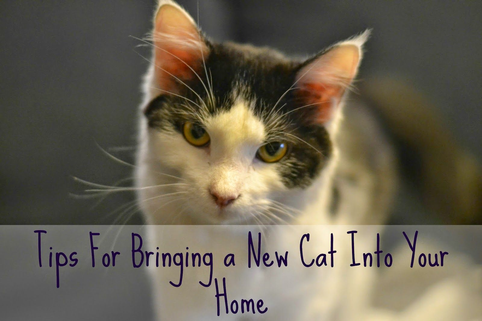 Tips For Bringing A New Cat Into Your Home Cats Cat Training Cat Biting