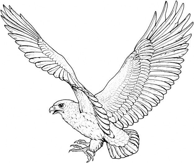 swooping falcon tattoos Flying Hawk Tattoo Outline flying hawk - new eagles to coloring pages
