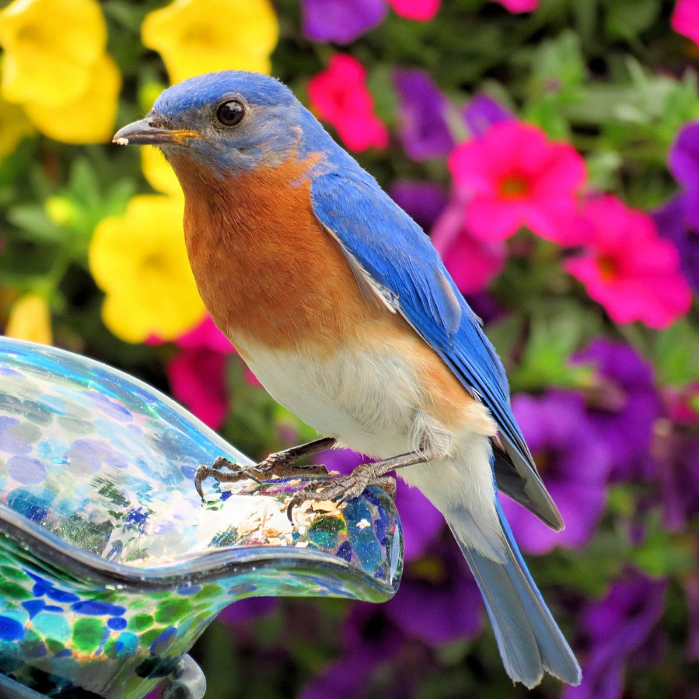 13 Foolproof Tips to Attract Birds to Your Yard | How to ...