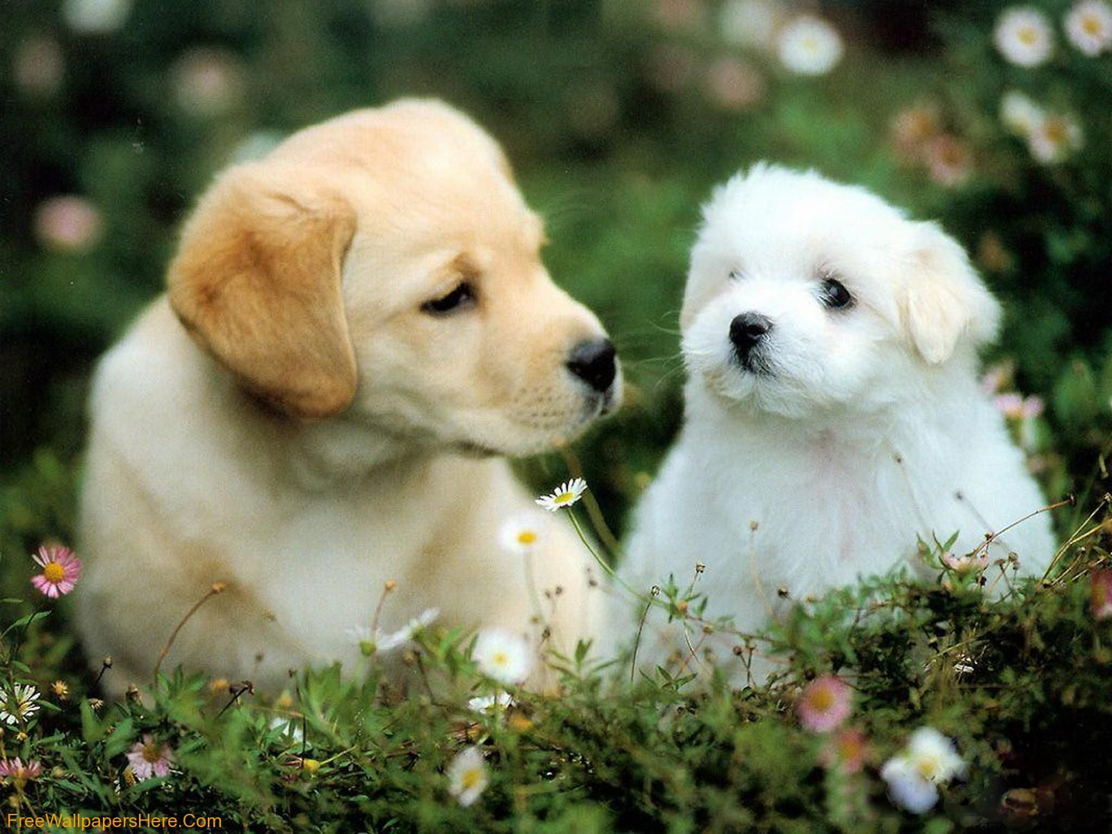 18 best cute puppies images on pinterest animals google search