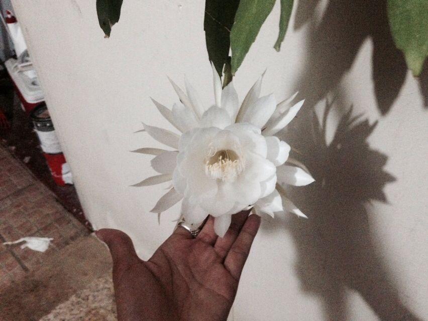 Dama de Noche Flower..!