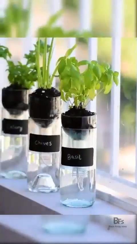 DIY Self Watering Plants Video