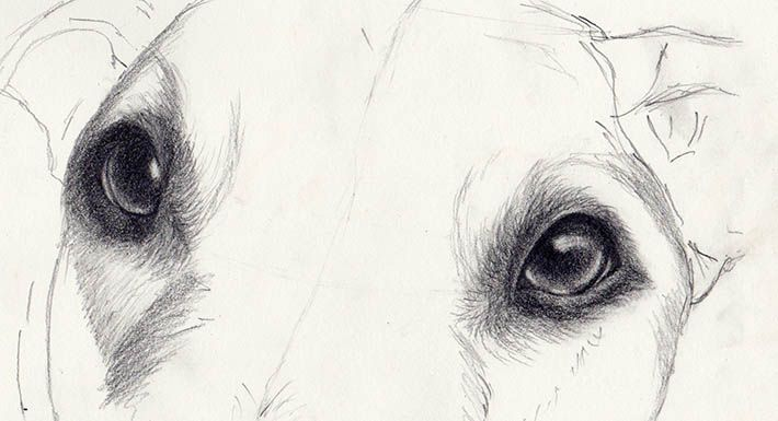 Drawing a realistic dogs starts with lifelike eyes eyes get a step by step tutorial by artist veronica winters for drawing eyes that jump off the page