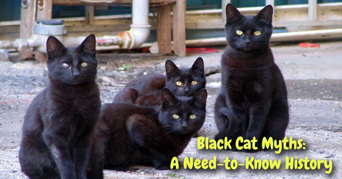 Black Cat Myths A NeedtoKnow History Black cat day