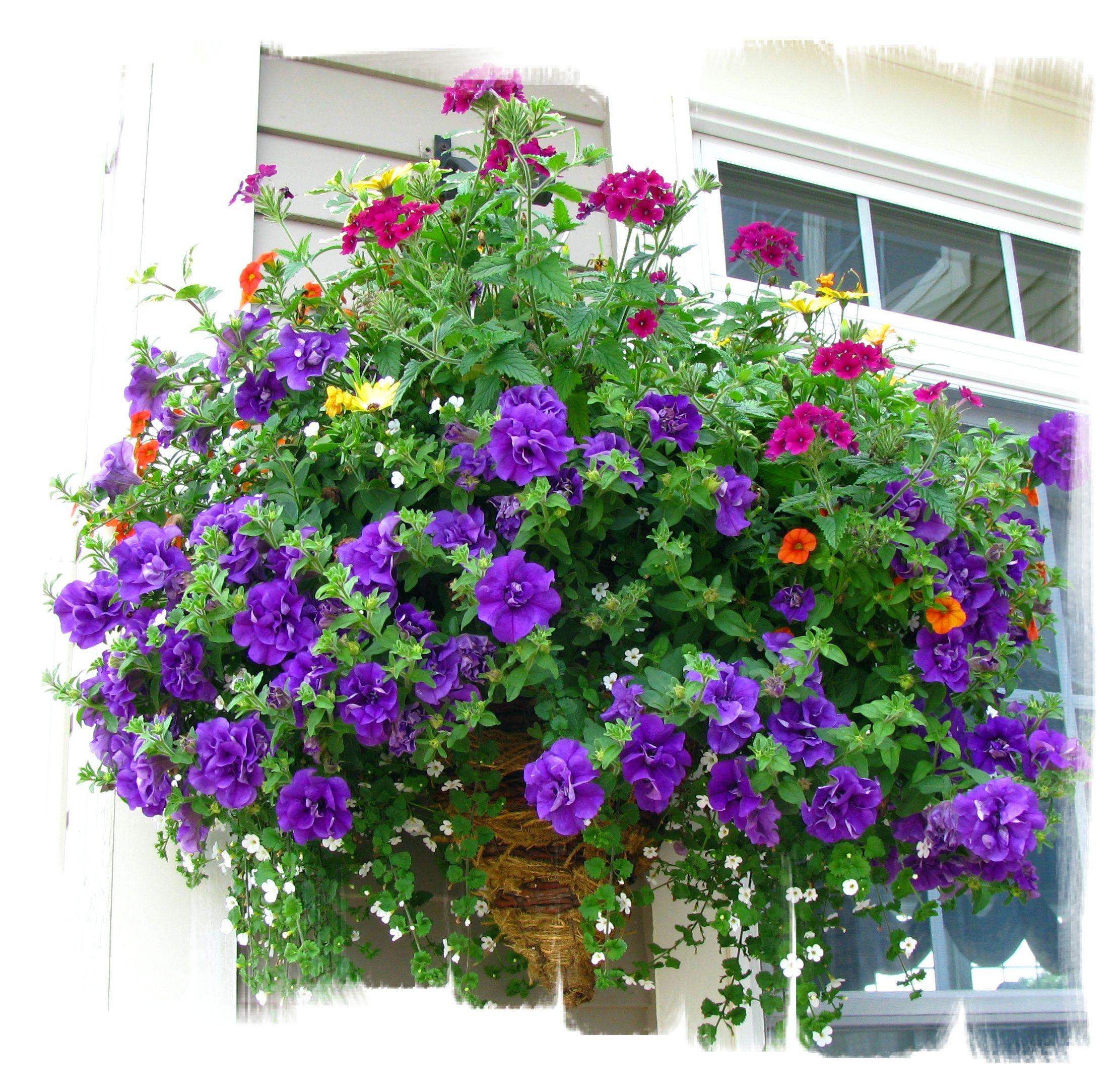 Beautiful purple basket.