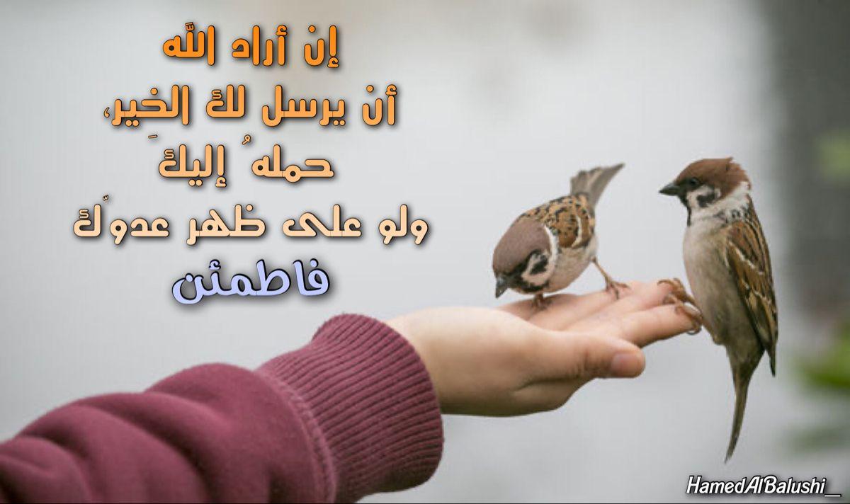 Pin By حمد البلوشي On موعظة Animals Bird