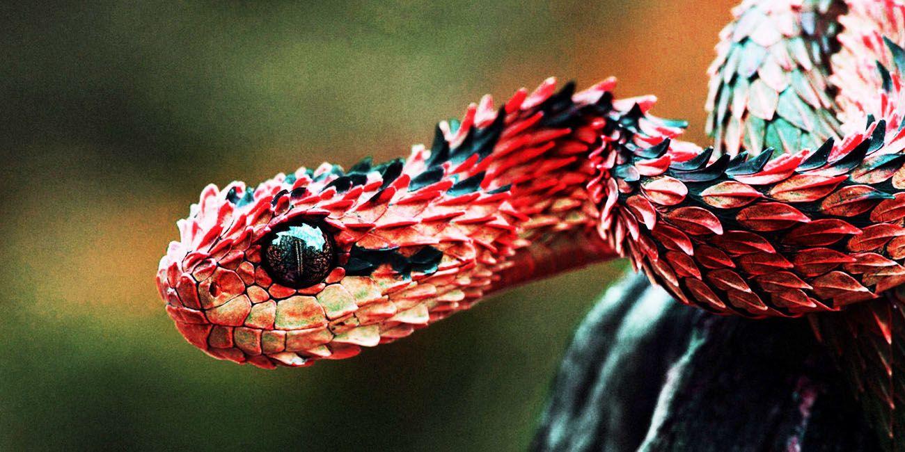 Snek Imgur Snake Wallpaper Beautiful Snakes Viper Snake