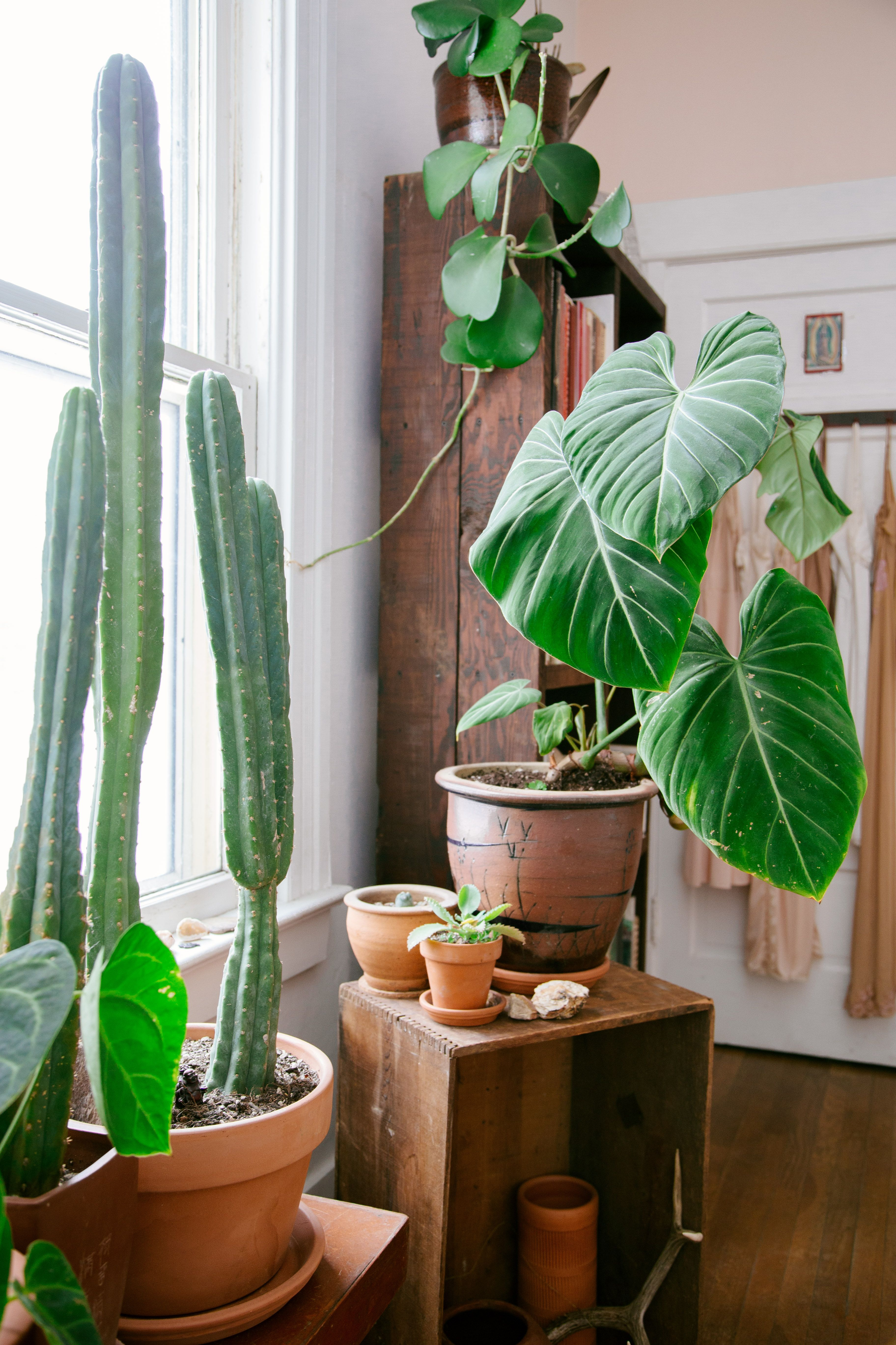 stylist design house plant seeds. Earthy Boho  Jungalow Hanging Potted PlantsPot Garden pots Cacti and Plants