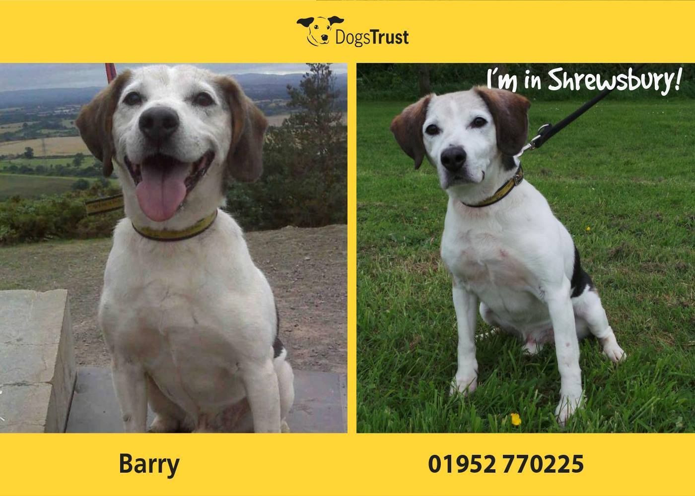 Barry At Dogs Trust Shrewsbury Is A Smashing Lad With A Face That Everyone Falls In Love With He Has An Independe Dogs Trust Dogs For Adoption Uk Shelter Dogs