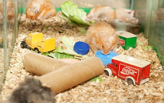 How To Build Hamster Toys Out Of Household Items Hamster Toys Hamster Hamster Care