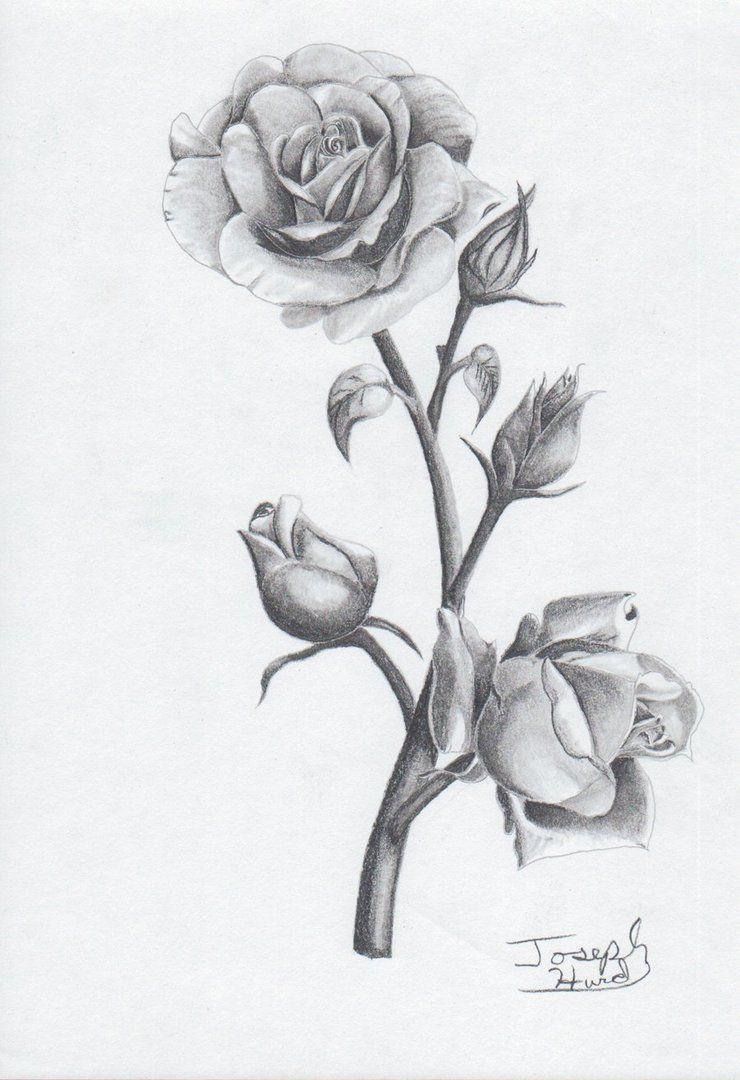 So Rosas Para Tatuagens Feminina Tatuagem Feminina Tatuagens De