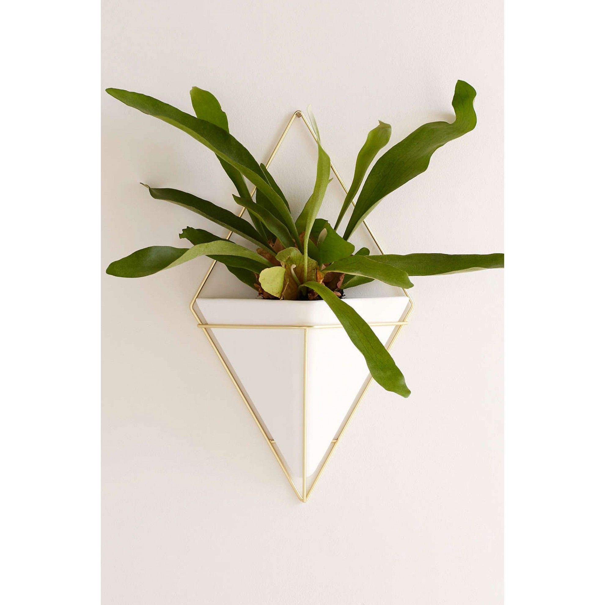 Shop Umbra Trigg Wall Planter At Urban Outfitters Today We