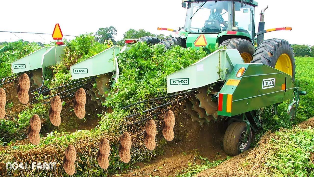 Peanut Harvesting Machine How To Harvest Peanut How It Works Noal Modern Agriculture Agriculture Organic Plants