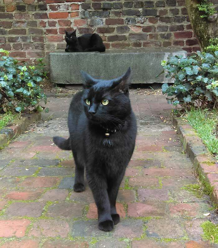 Edgar And Pluto Poe Museum Cats Richmond Va Such Beauties Cat Love Cute Animals Cats And Kittens