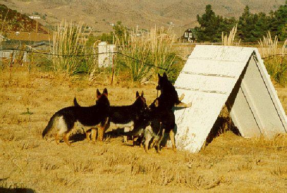Training Santa Clarita Rancho Rhein German Shepherds Training