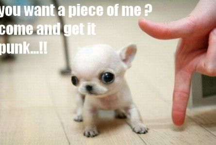 cutest puppies quotes - Google Search   Cute animals, Super ...