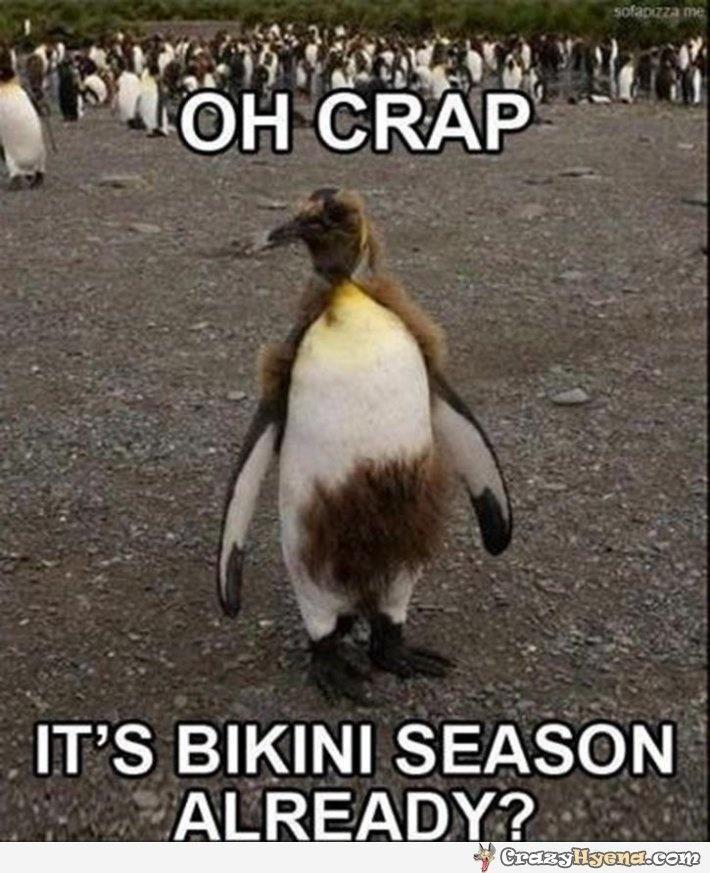 Hahahaha! nasty penguin.