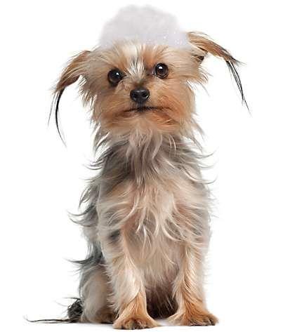 Soapy Dog Dog Adoption Animal Shelter Animals Friends