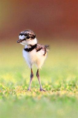 Birds Barbershop Domain Birds Ukulele Chords Birds Of Prey Book Birds Pict Guzel Kuslar Guzel Yaratiklar Hayvanlar Alemi