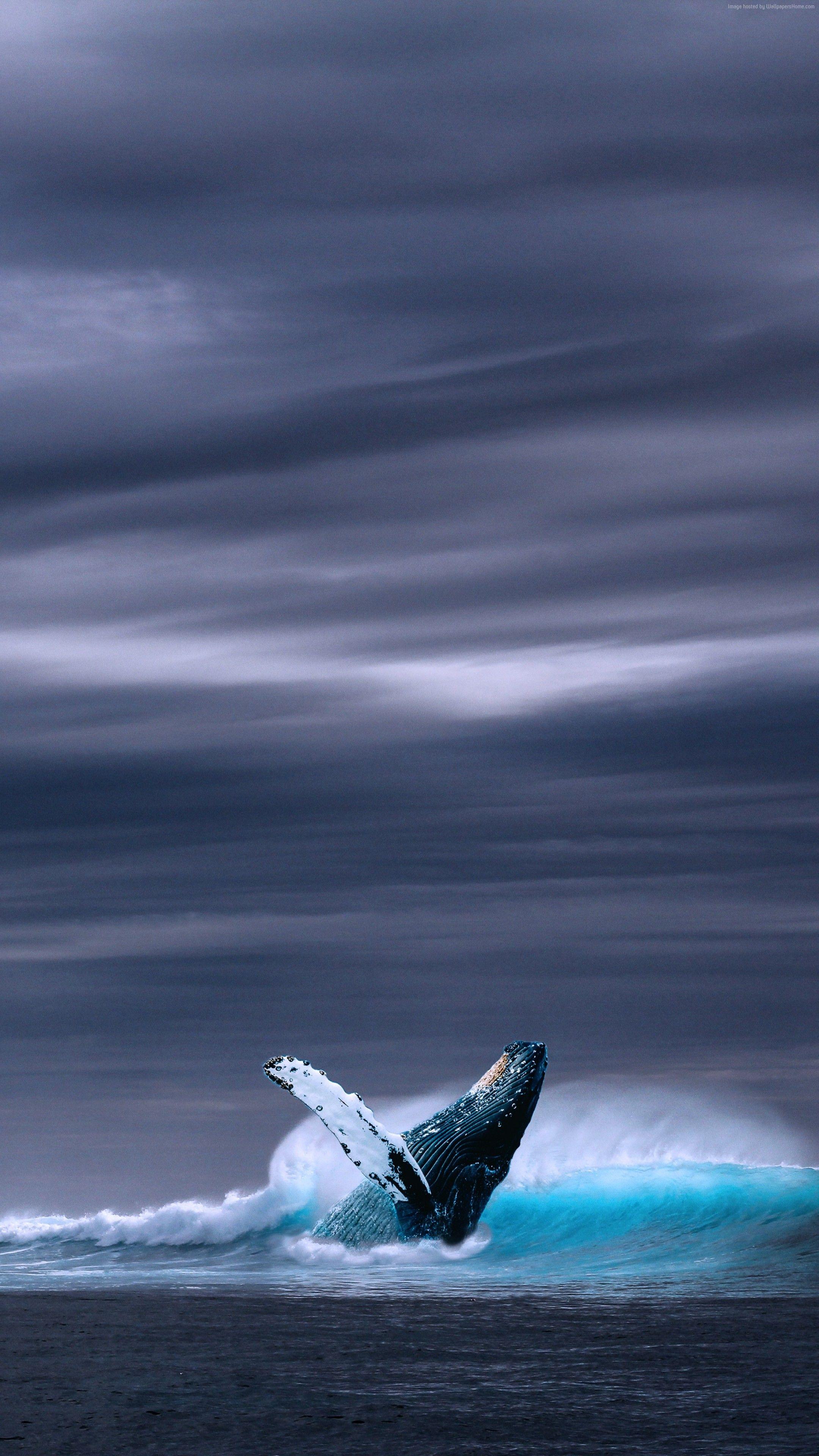Whale Http Wallpaperhd Site Whale 6192 5k Ocean Sky 5k Ocean Sky Whale Pictures Ocean Animals Beautiful Sea Creatures