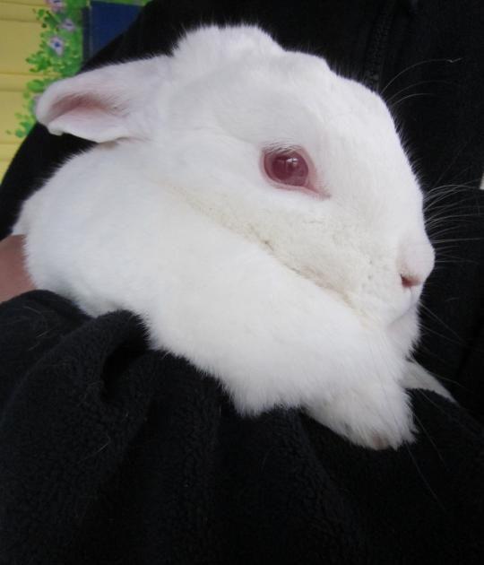 Pin On Bunnies Rew Bew In Rescue
