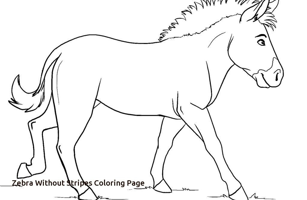 Zebra Coloring Pages Coloring Pages Kids Of Zebra Without Stripes Coloring Page Zebra Coloring Pages Coloring Pages Free Coloring Pages