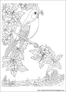 Coloring Pages Coloring Pages Beautiful Birds And Scenery Bird