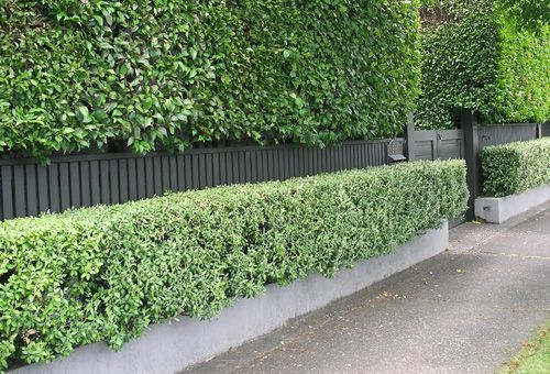 A good example of layering plants with a fence and a low ...