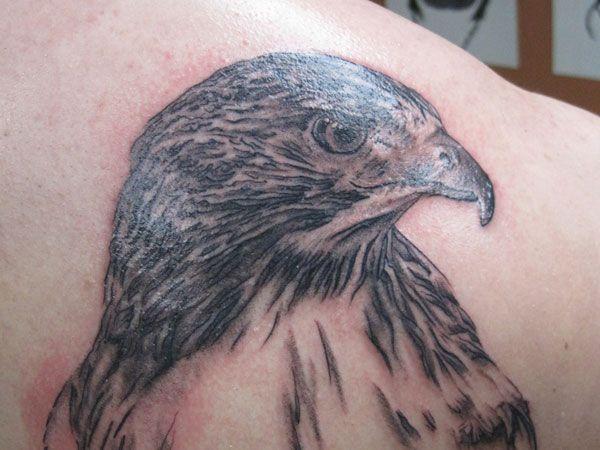 Pencil Sketch Style Hawk Tattoo The Fierce Eye Has