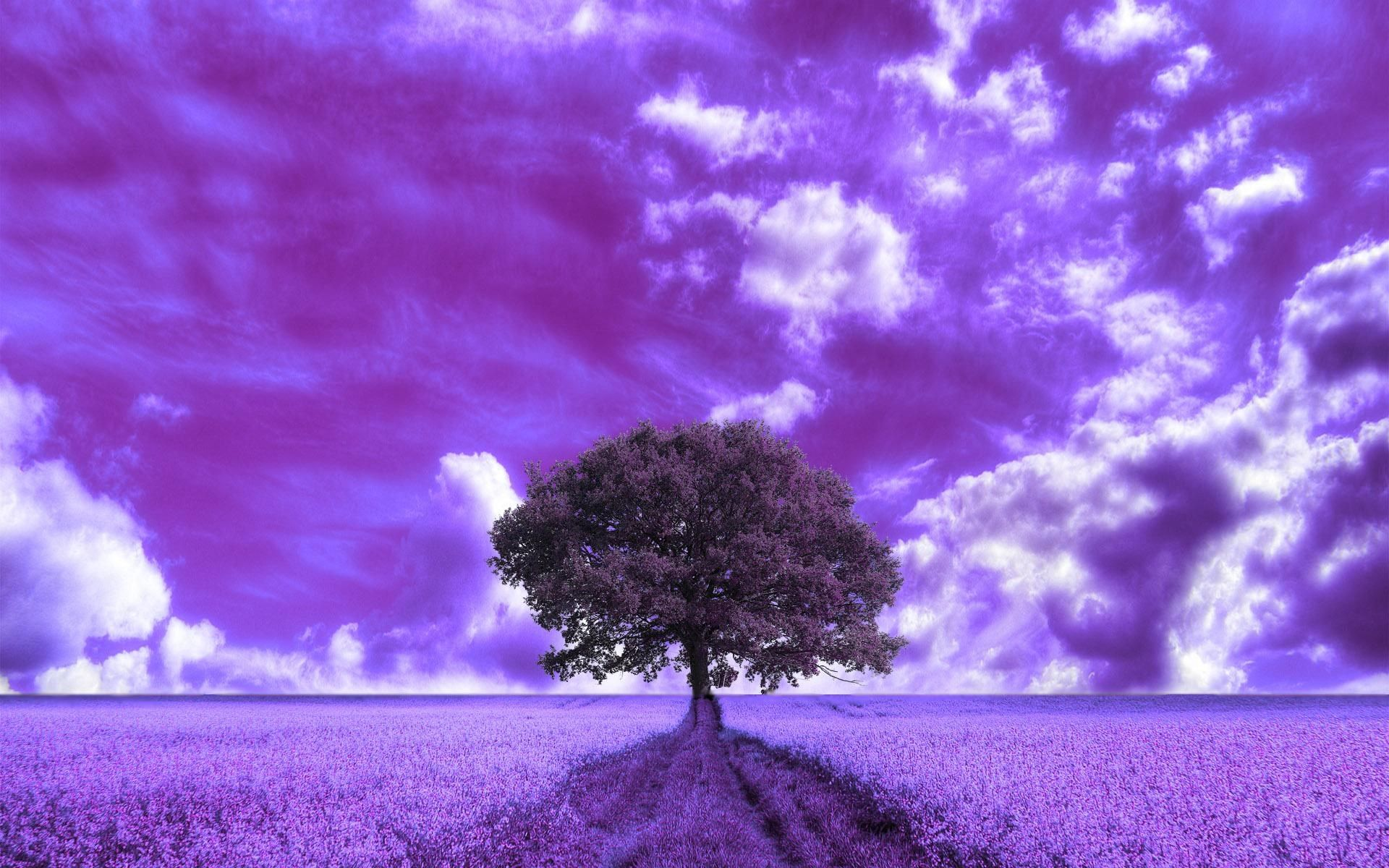tree image for large desktop - tree category | gogolmogol | pinterest