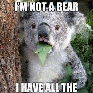 Funny Quotes about koala Bears