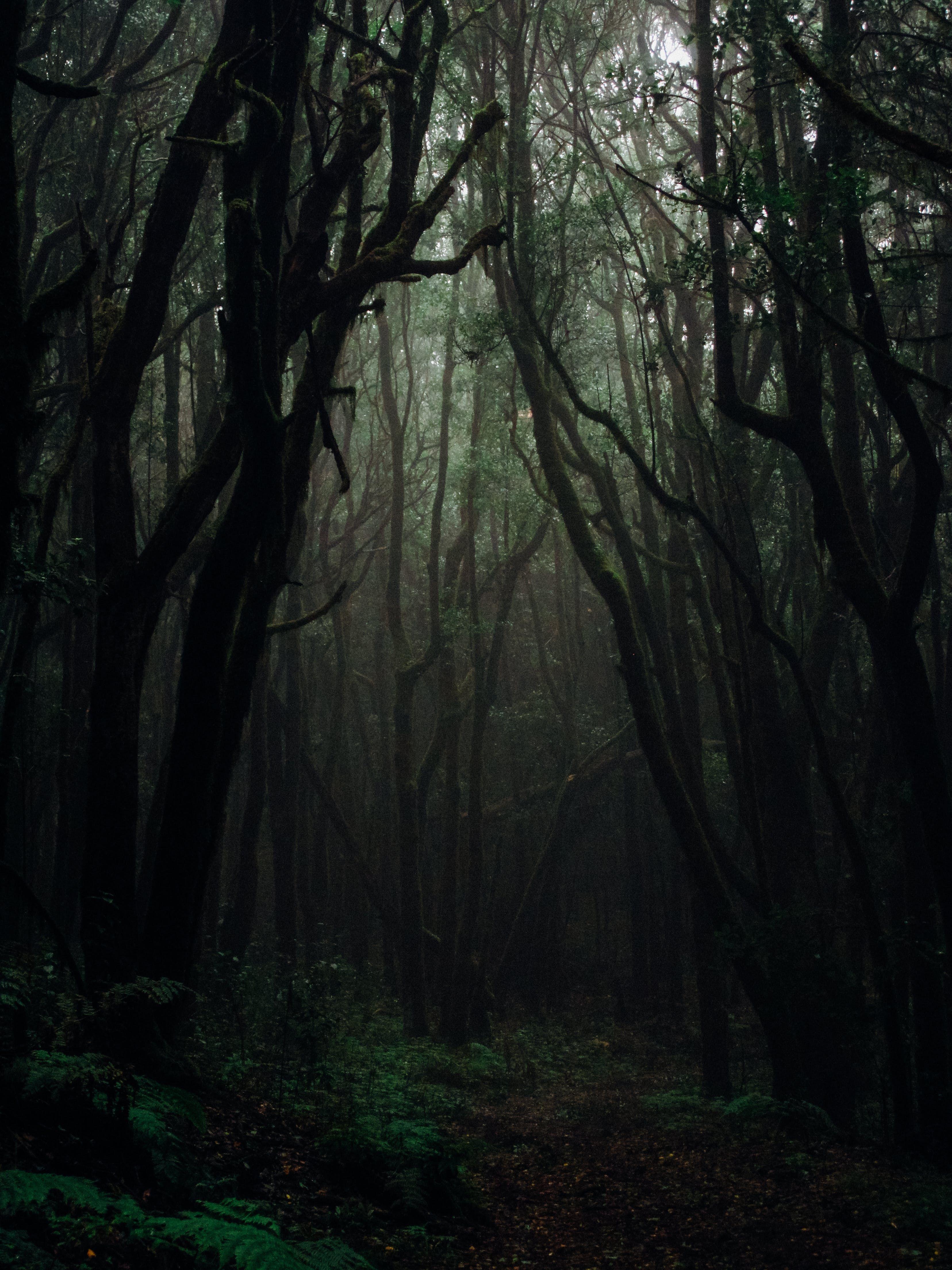 New Free Stock Photo Of Dark Daylight Eerie Forest Photography Forest Photos Dark Forest