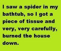 You don't mess around when it comes to spiders.