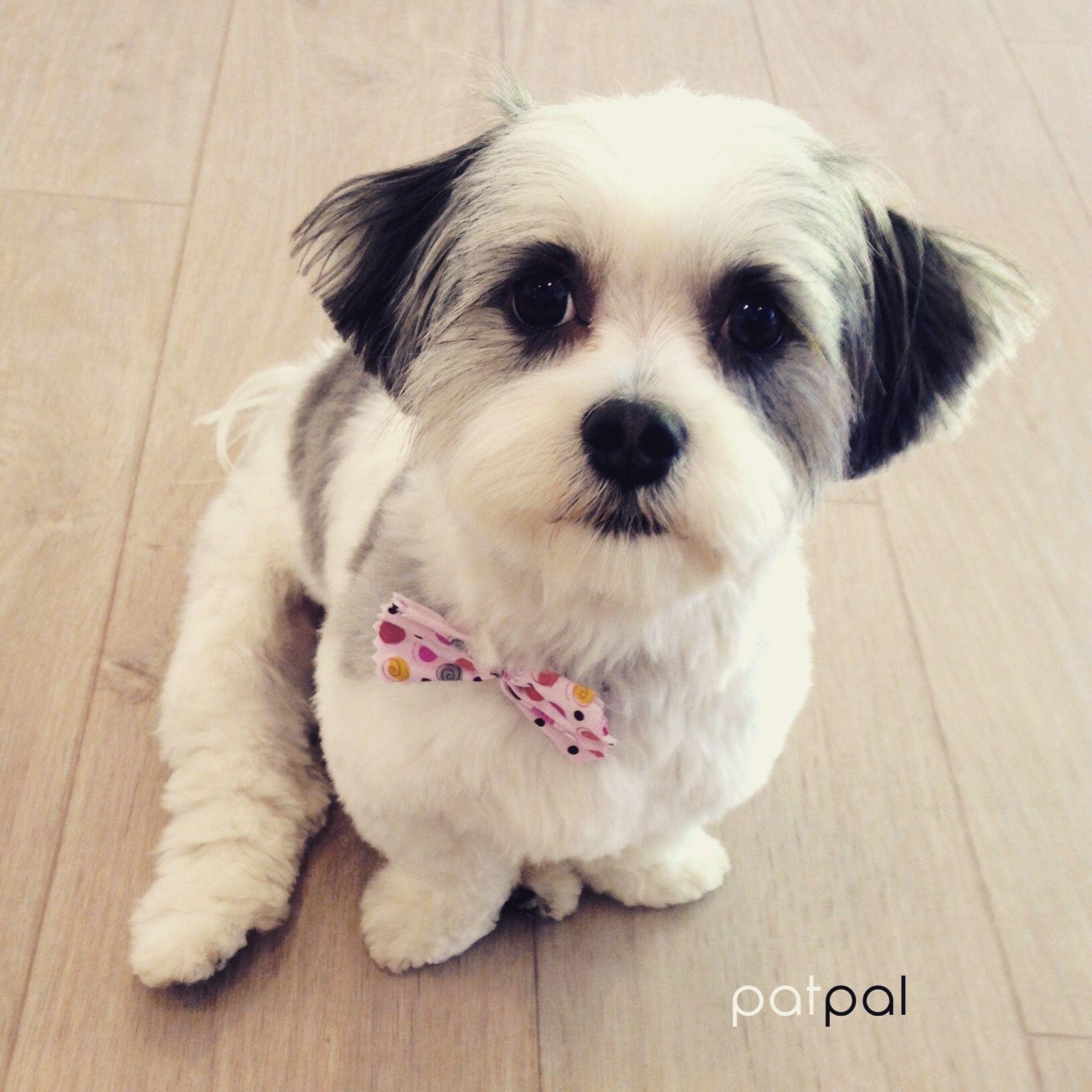 Pin On Dog Haircuts