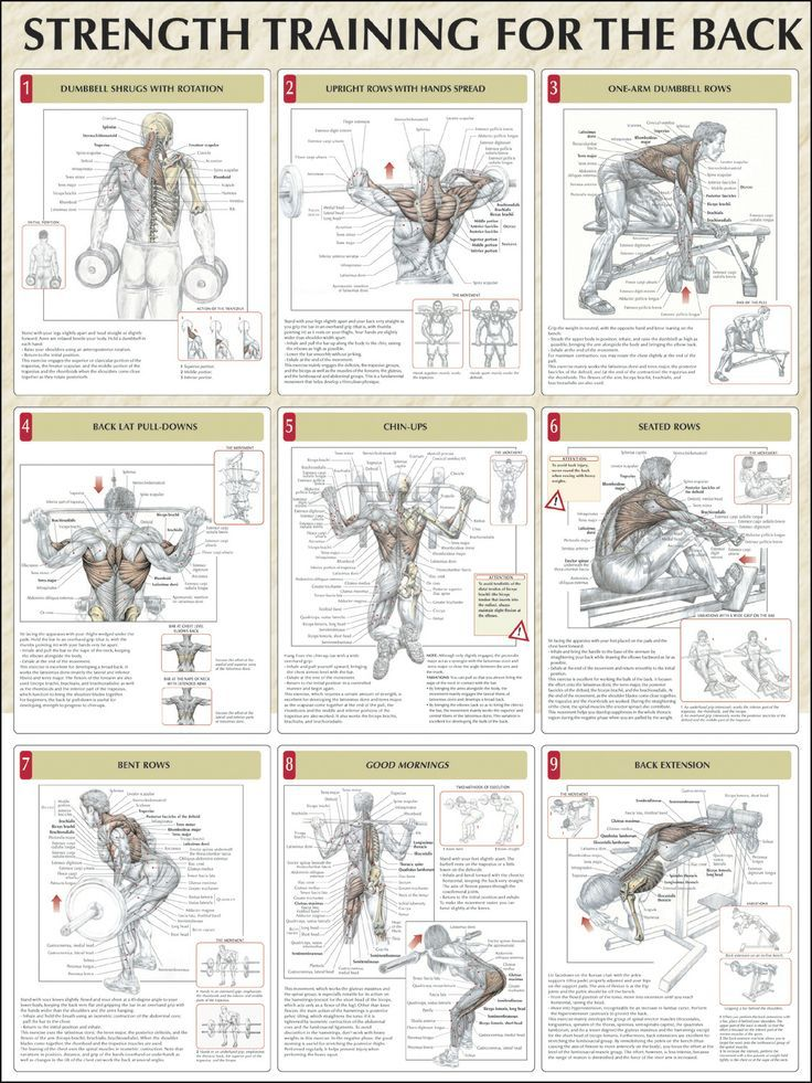 9 Strength Training Workouts for the Back Muscle ANATOMY | Strength ...
