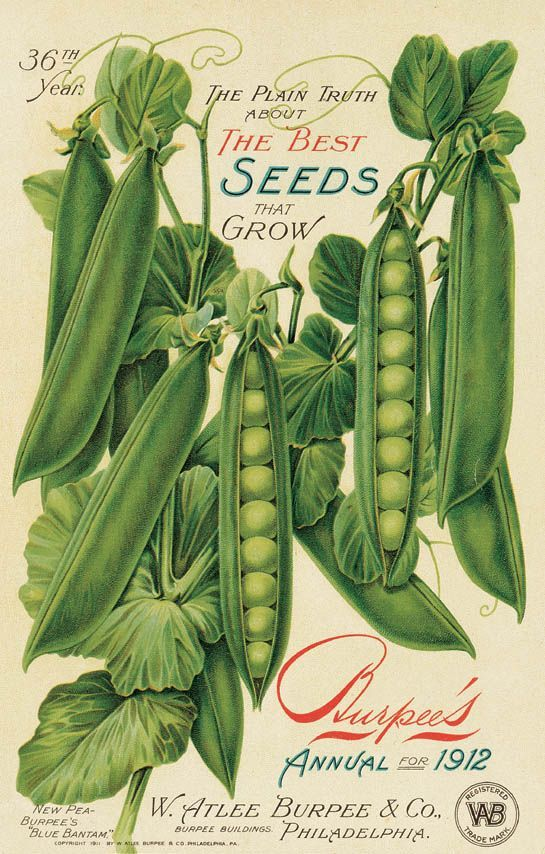 Old Seed Packets To Print Annual Would Love To See These Vintage Packet And Annuals In Print Seed Catalogs Vintage Seed Packets Seed
