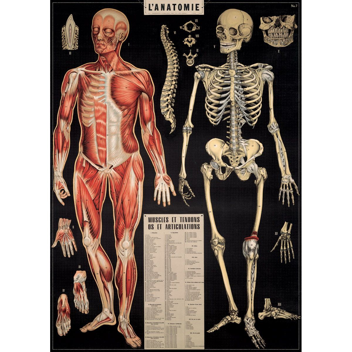 French Human Anatomy Chart Vintage Style Poster   Decorative paper ...
