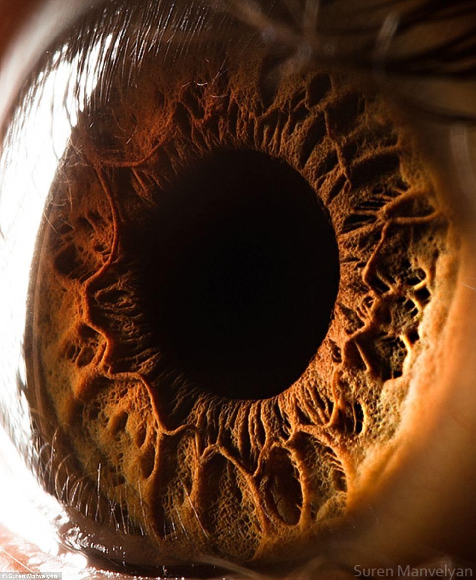 Todos aquellos que no lo hayáis visto, no os lo podéis perder. Mirad que fotografías tan geniales del iris humano en primer plano. Como bien dicen en el artículo, cuando pensamos en el globo ocular la mayoría de nosotros solemos asociarlo a una superficie tan lisa como el mármol. Estas imágenes muestran las texturas complejas del iris que dan a nuestros ojos un carácter único.