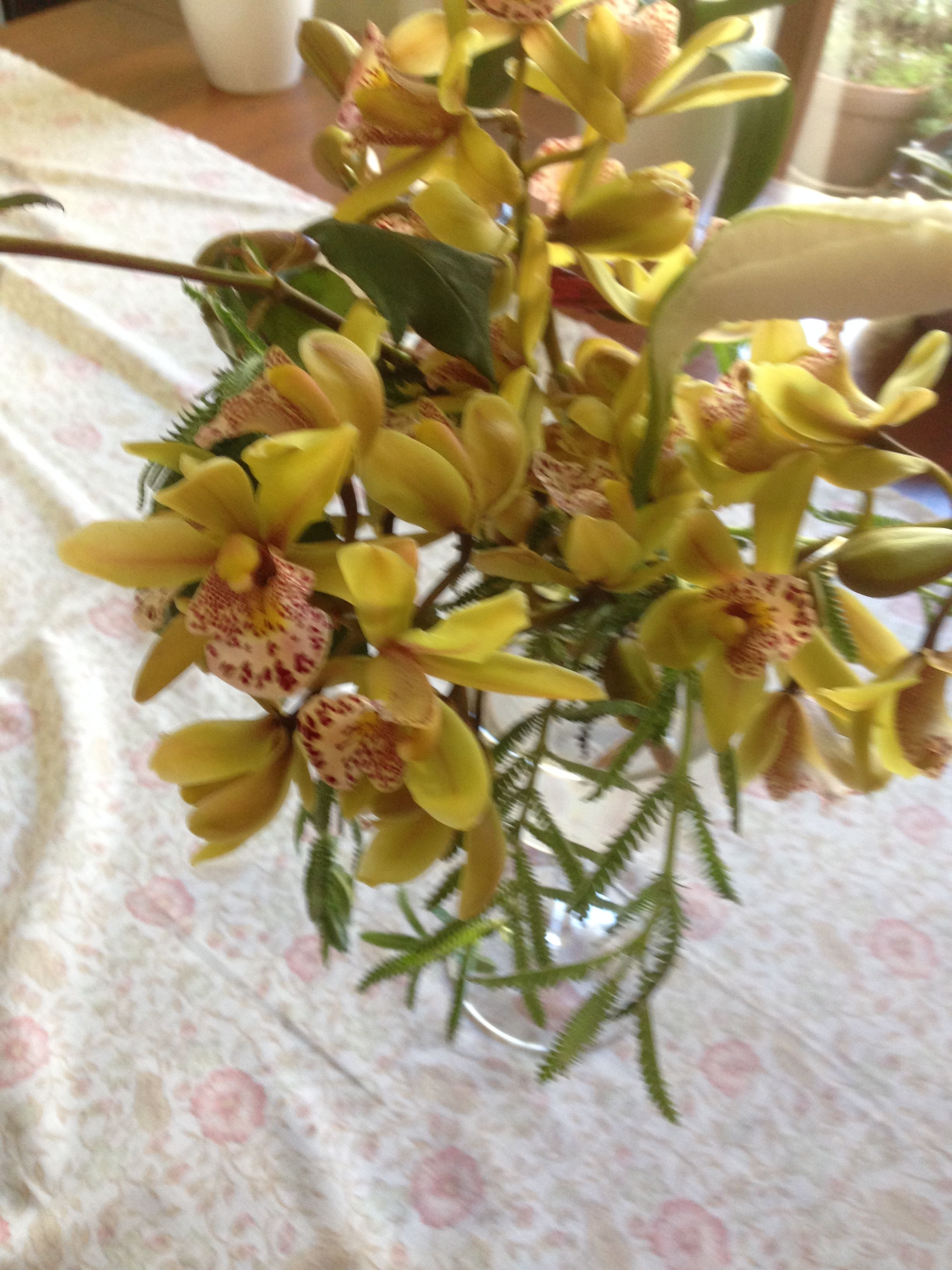 Lots Of Little Flower Spikes This Year 2015 So Brought Some Inside To Enjoy Just Love This Mini Cymbidium Flower Spike Orchid Flower Flowers