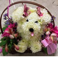 'Lulu the pup' available at Fremont Flowers.