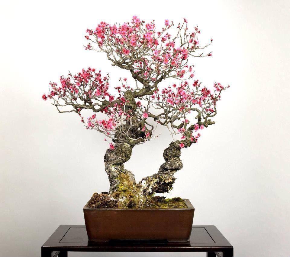bonsai bonsai pinterest kleine b ume die kleinen. Black Bedroom Furniture Sets. Home Design Ideas