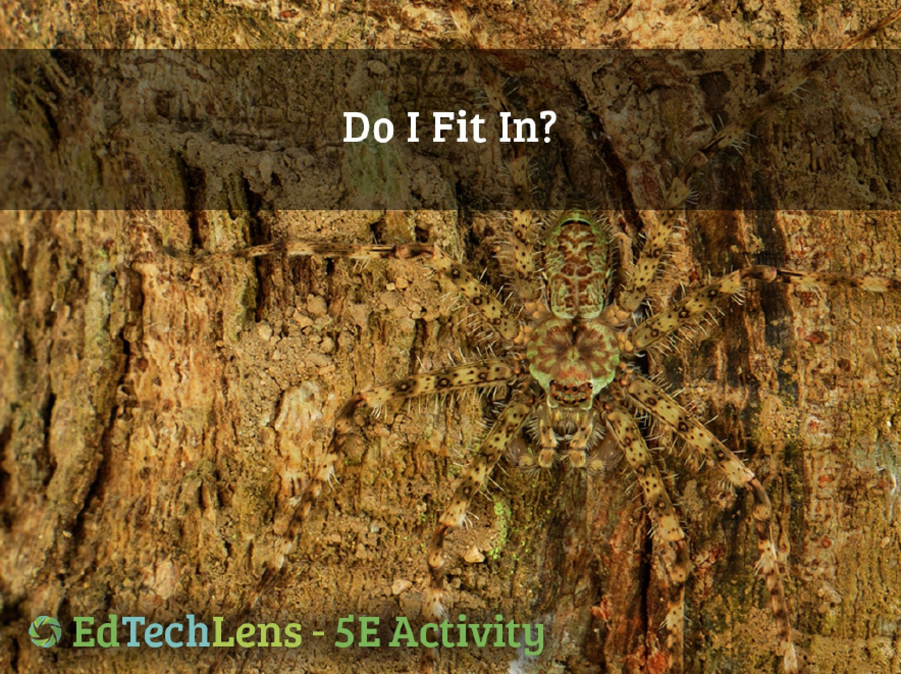 Do I Fit In? 5E Classroom Science Activity PDF (With