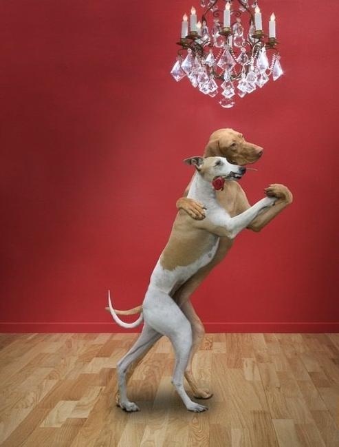 Doggie Tango!